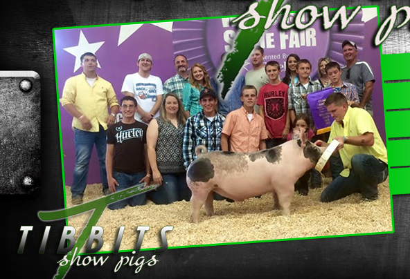 Tibbits Show Pigs : Mineral Point, WI
